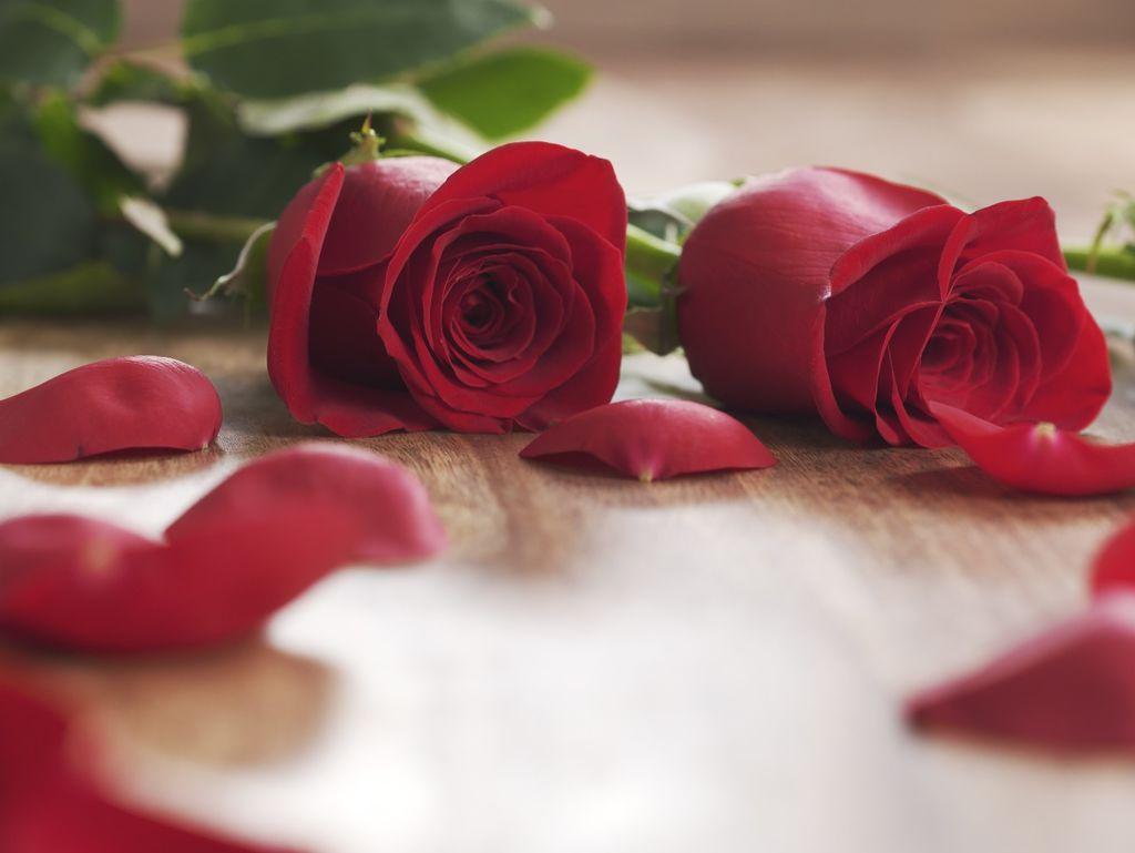 Le point f minin - Petale de rose comestible ...